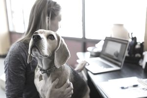 Woman working at laptop with Beagle on lap