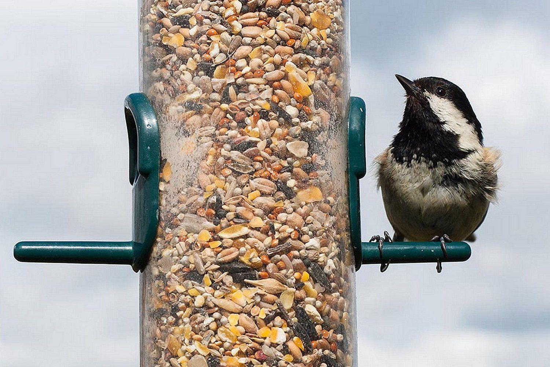 love oriole best essentials birds house bird songbird feeder fruit