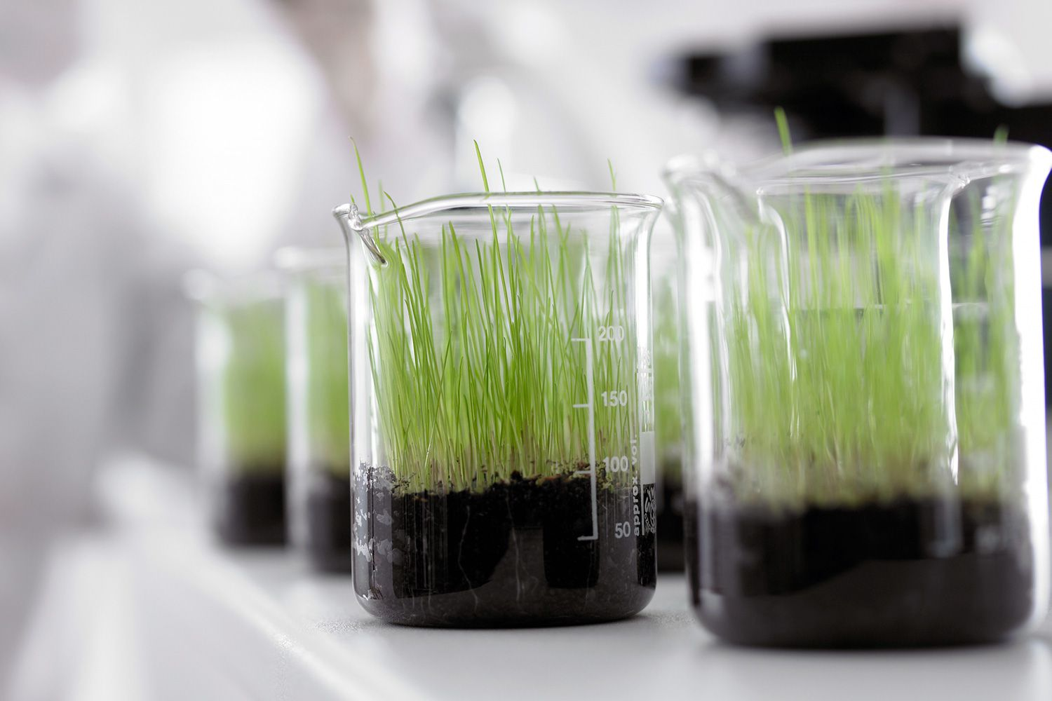 Using Plants In Science Experiments List Of Ideas