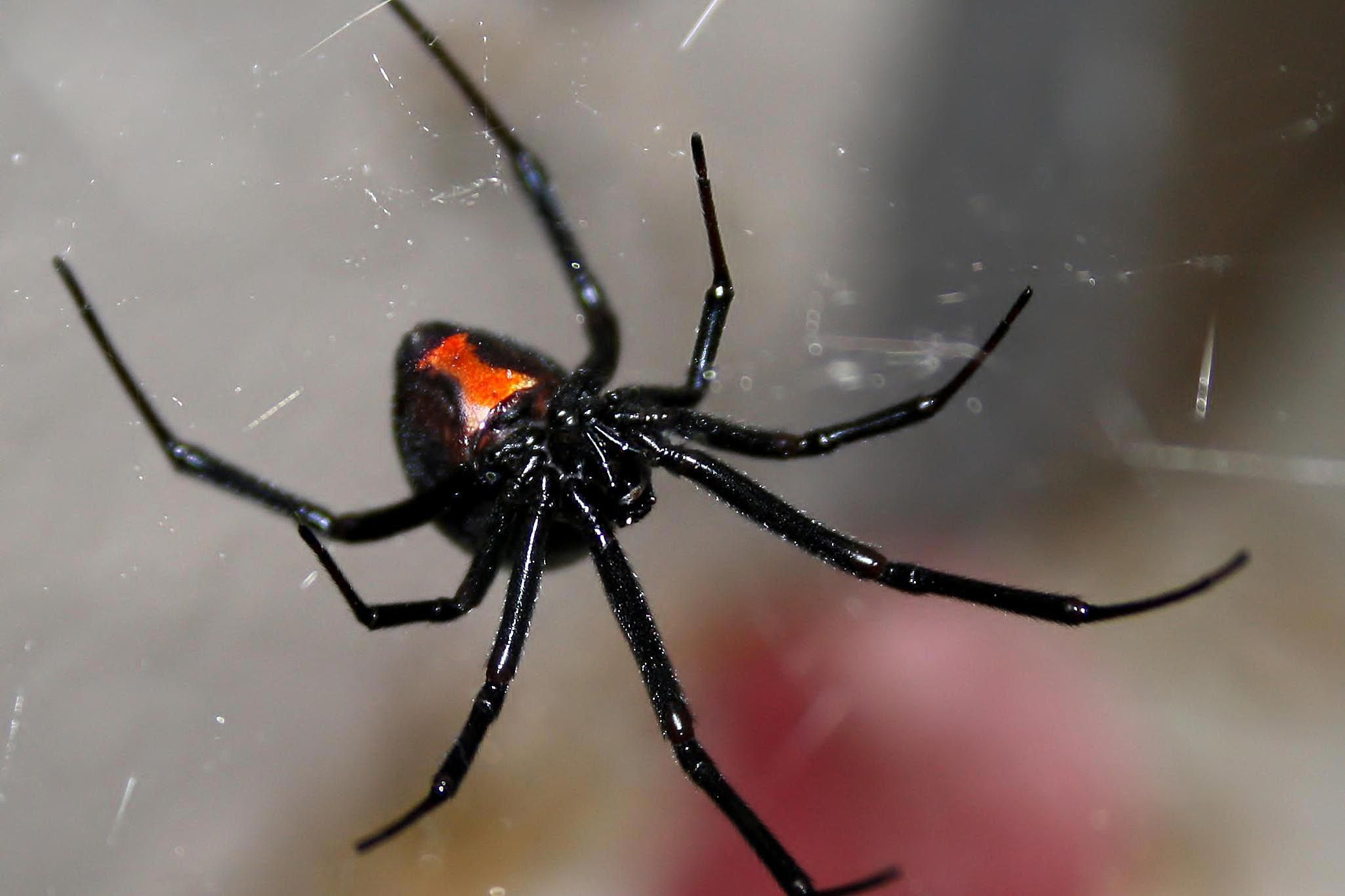 8 Effective Tips for Control of House Spiders