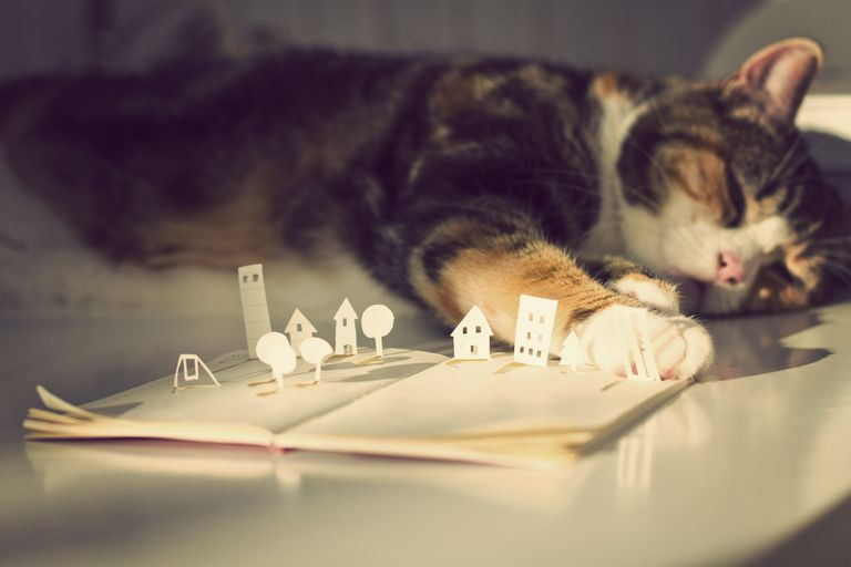 Cat Sleeping With a Paw on an Open Pop-Up Book
