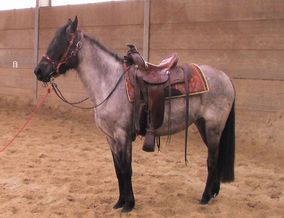 A horse wearing a saddle.
