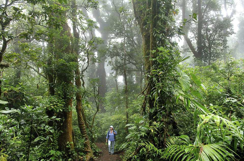 Woman hiking in the Monteverde Cloud Forest Reserve, Costa Rica, Central America