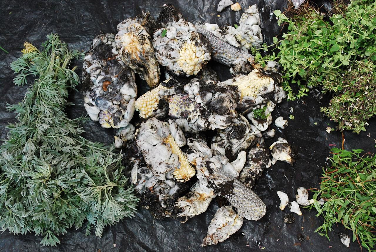 Huitlacoche Cuitlacoche Definition And Flavor