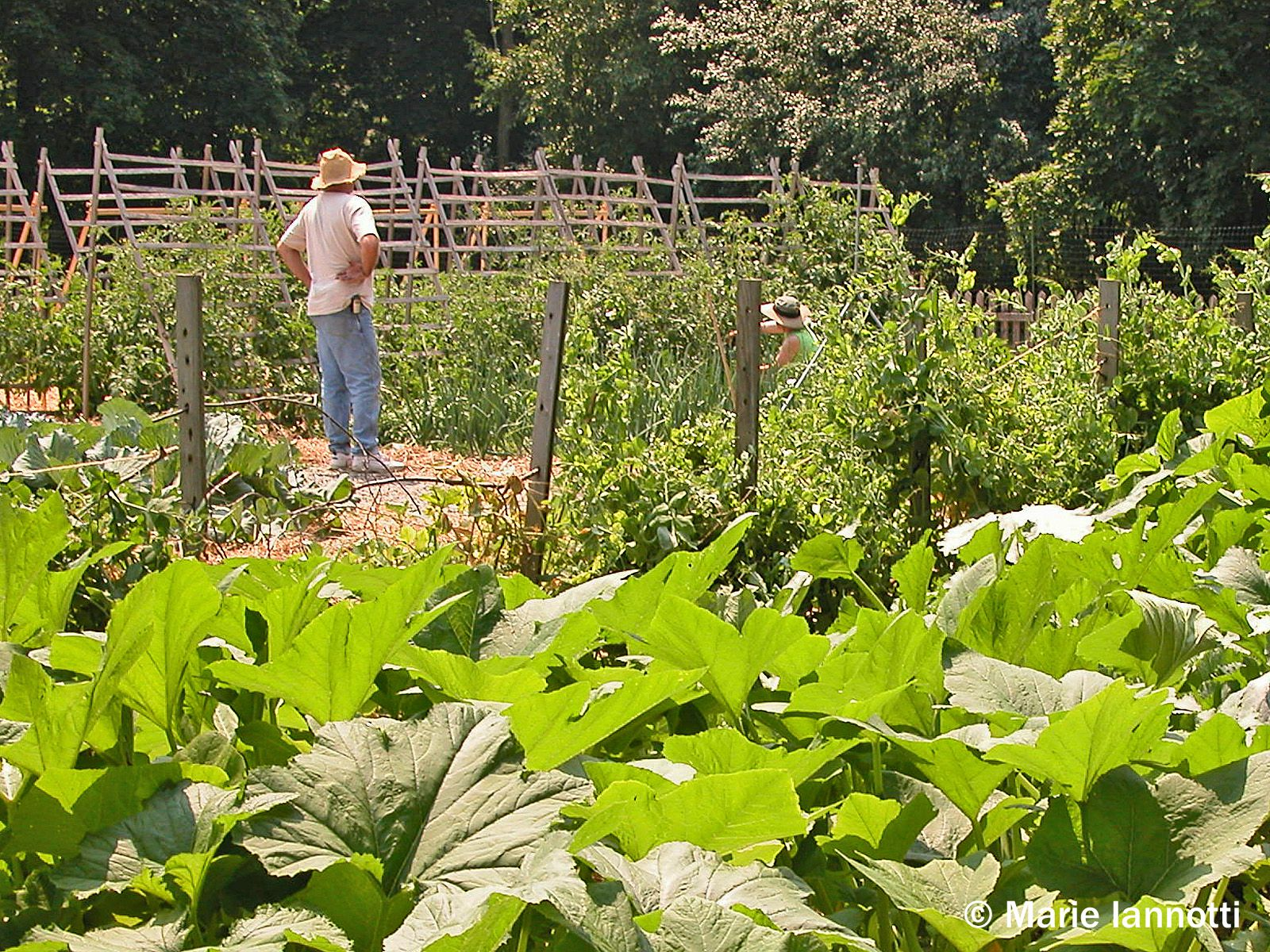 What to consider when planning a vegetable garden for Starting a vegetable garden