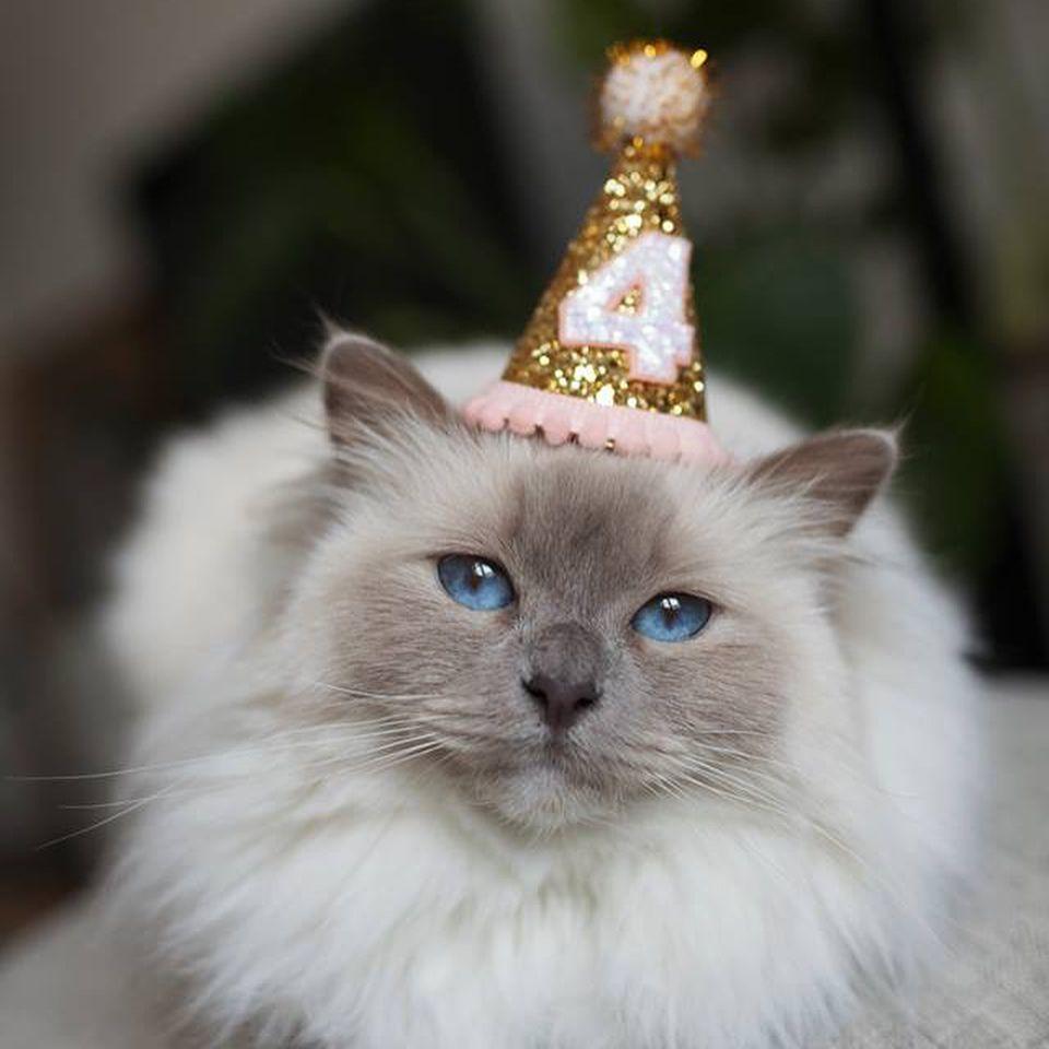 7 Fun Ways To Celebrate Your Cat S Birthday