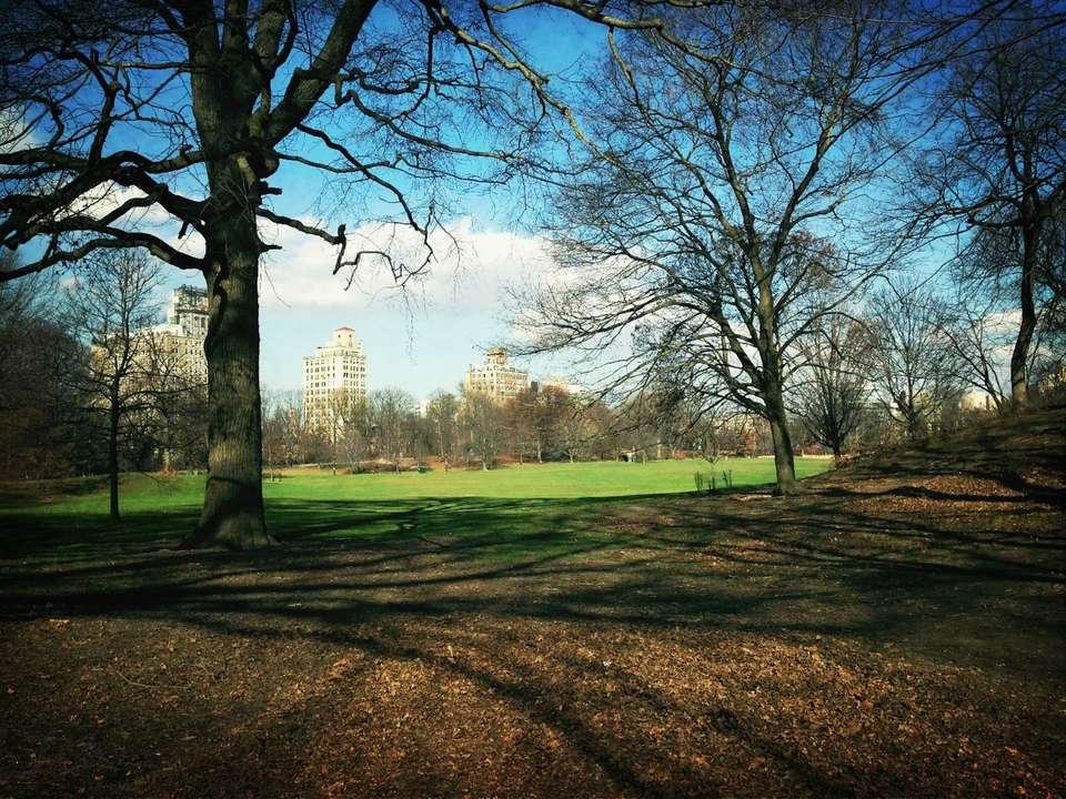 View of Prospect Park
