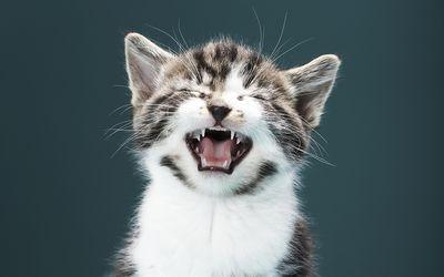fromm wet cat food
