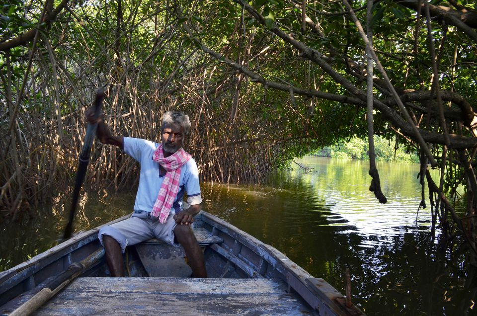 Pichavaram Mangrove Forest In Tamil Nadu How To Visit It