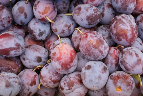Image of Moyer Plums