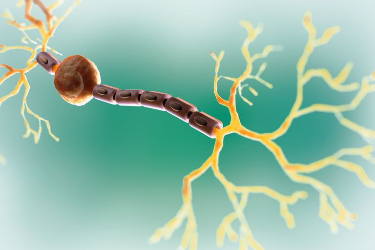 Bipolar Neuron