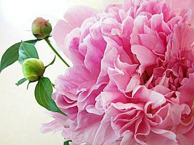 Top 23 Flower Wallpapers