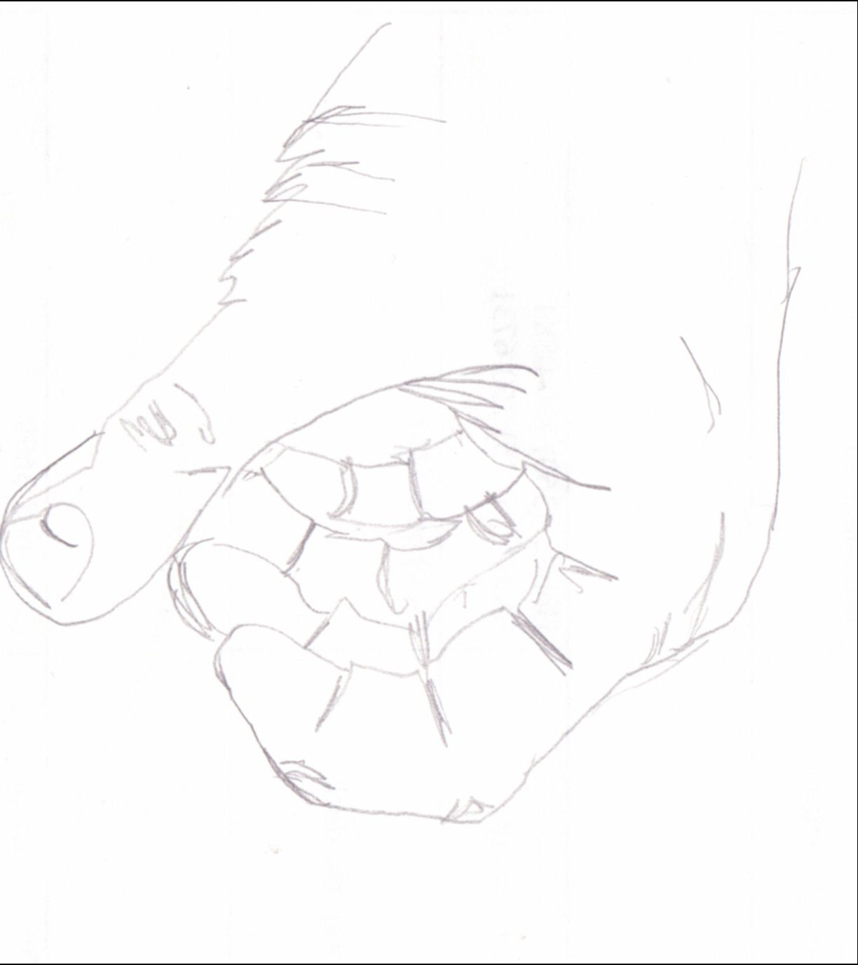 Blind Contour Line Drawing Exercises : Blind contour drawing a classic exercise