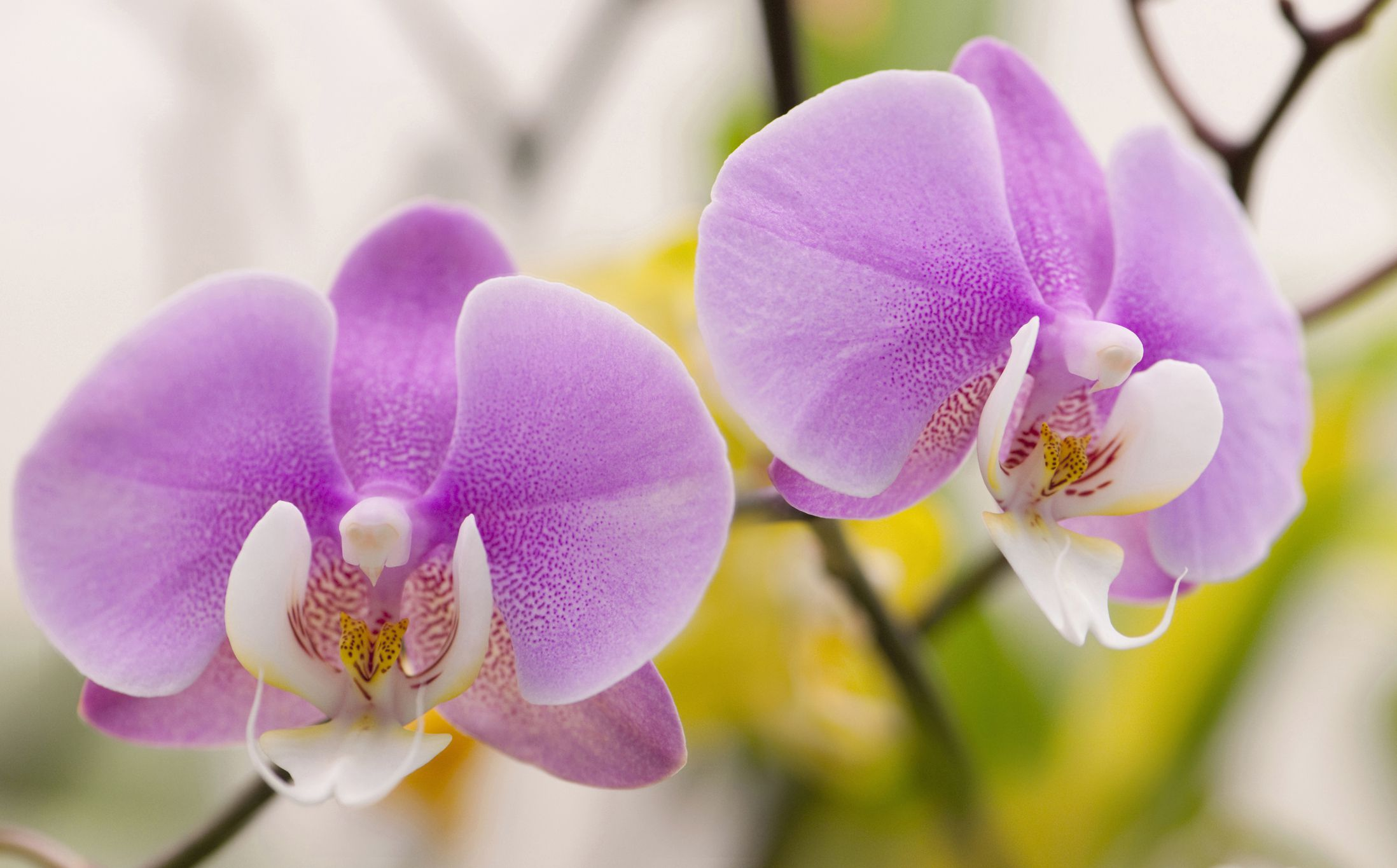 Small Red Bathroom Ideas Tips On Growing Phalaenopsis Orchids