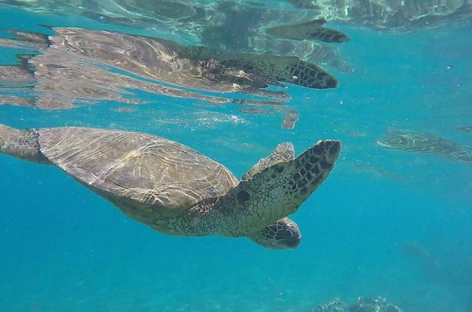 Small-Group Molokini Snorkel and Green Sea Turtle Adventure from Maui