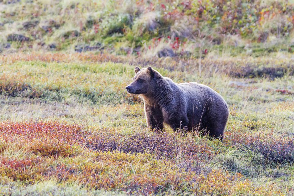 Campers need to take precautions that keep bears at a safe distance.
