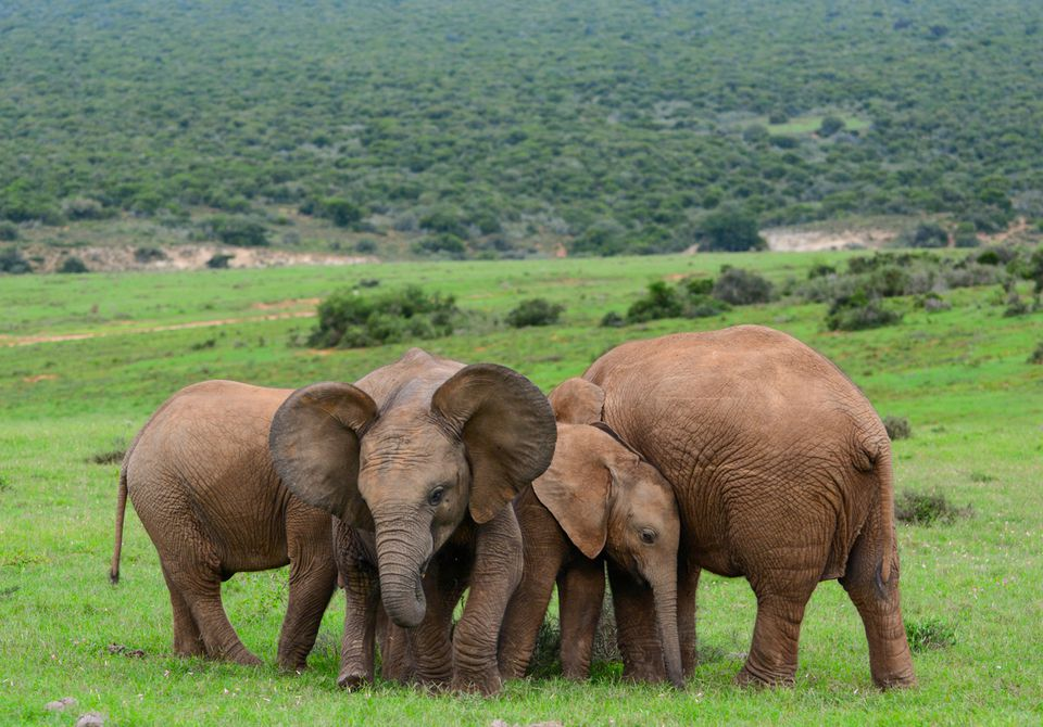 Addo Elephant National Park South Africa Complete Guide