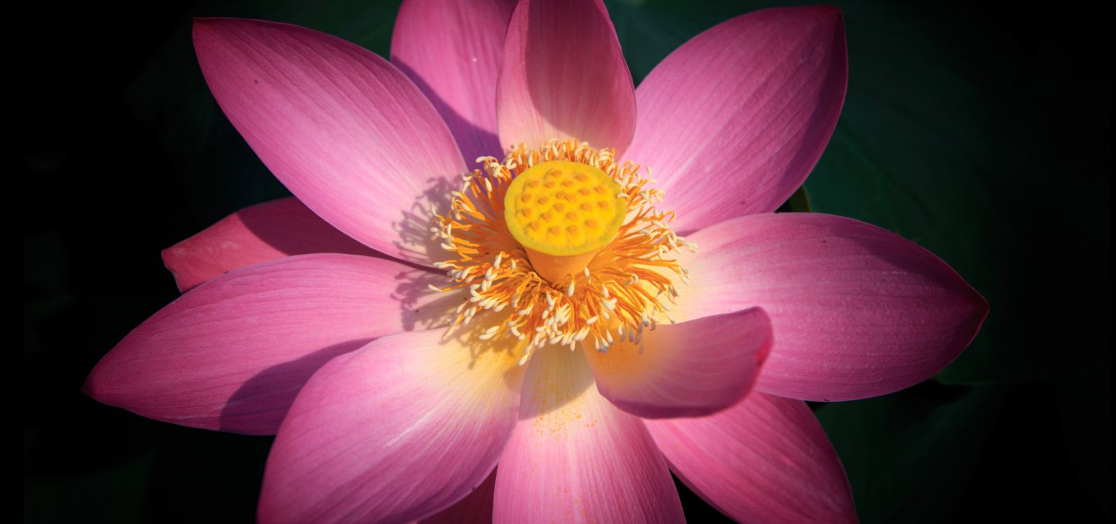 Parts of a flowering plant quiz izmirmasajfo Gallery