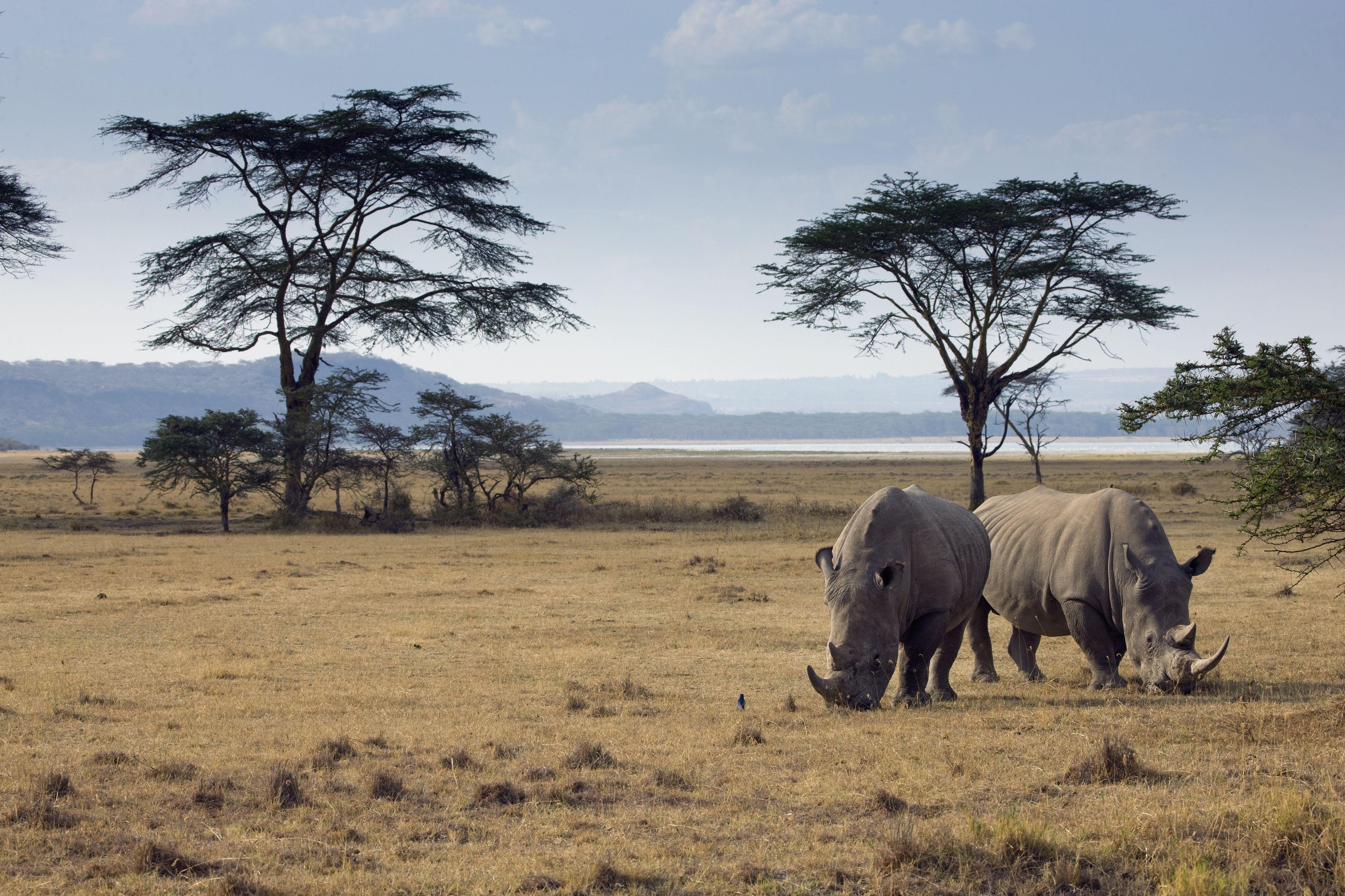 africa u0027s most dangerous animals