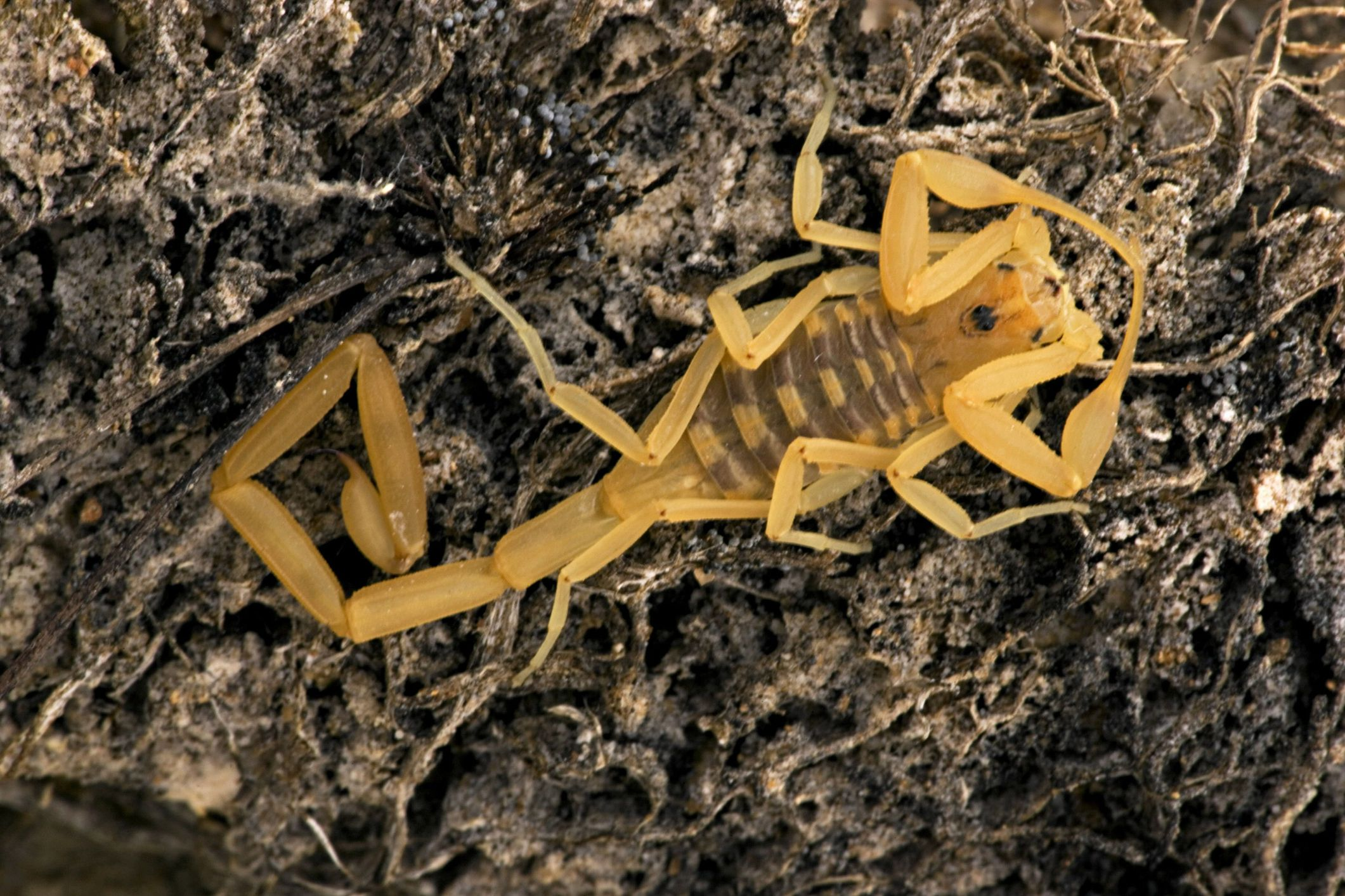 Real life scorpion sting experiences biocorpaavc