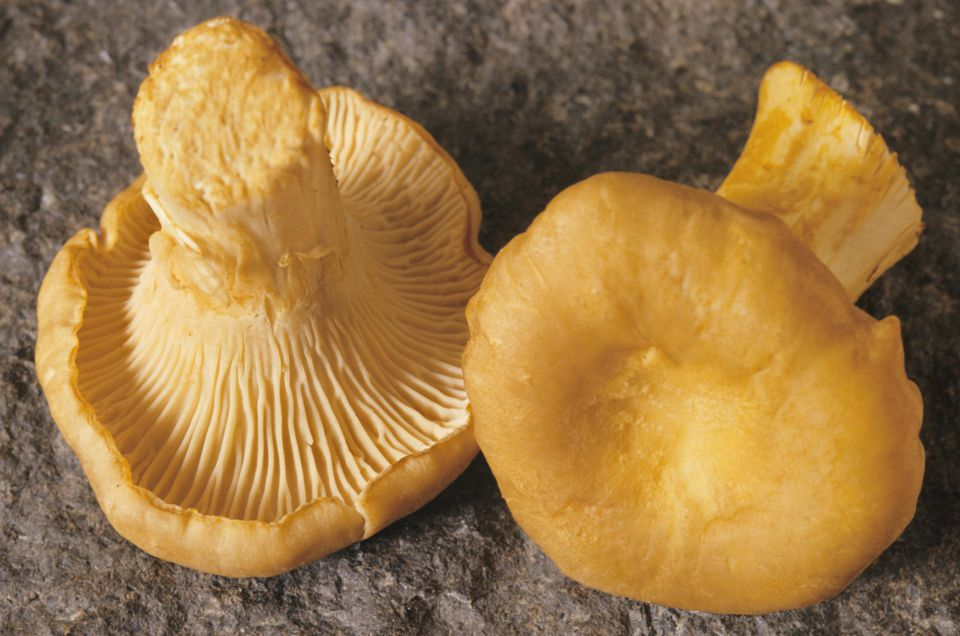Chanterelle mushrooms(Cantharellus cibarius), close-up