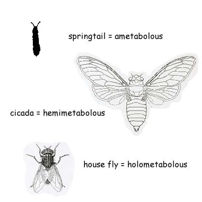 The physical transformation of insects from one life stage to the next is called metamorphosis. Insects may undergo gradual metamorphosis, complete metamorphosis, or none at all.