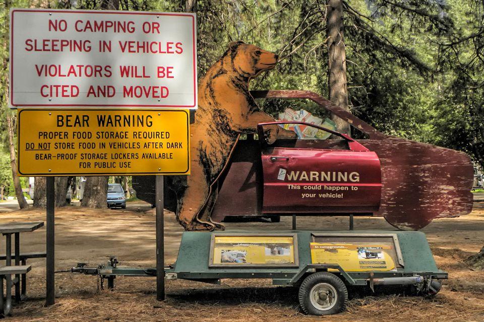 Bear Warning at Yosemite National Park