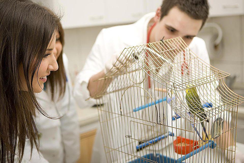 Veterinarian examining parrots, focus on female veterinarian