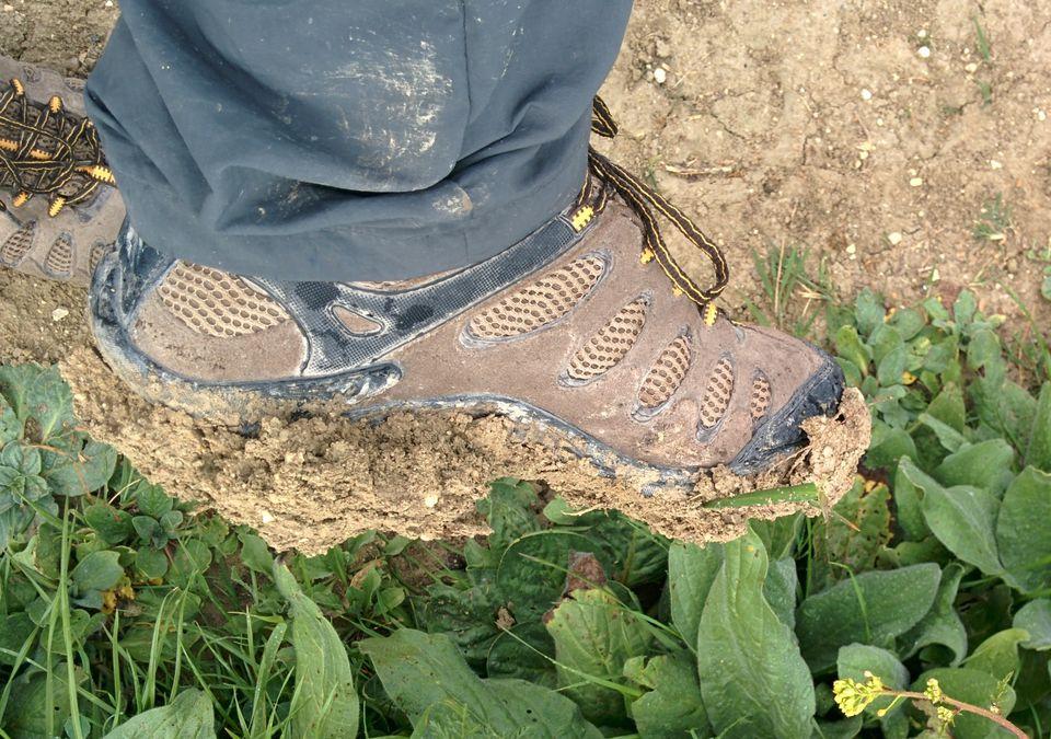 Vertis Ventilator hiking shoes