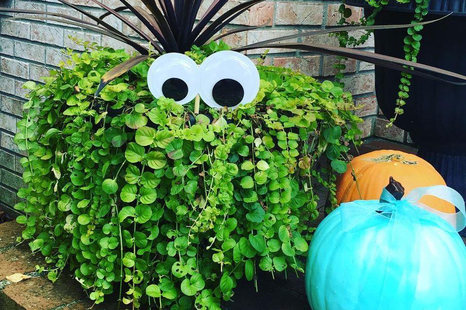 shrub monster
