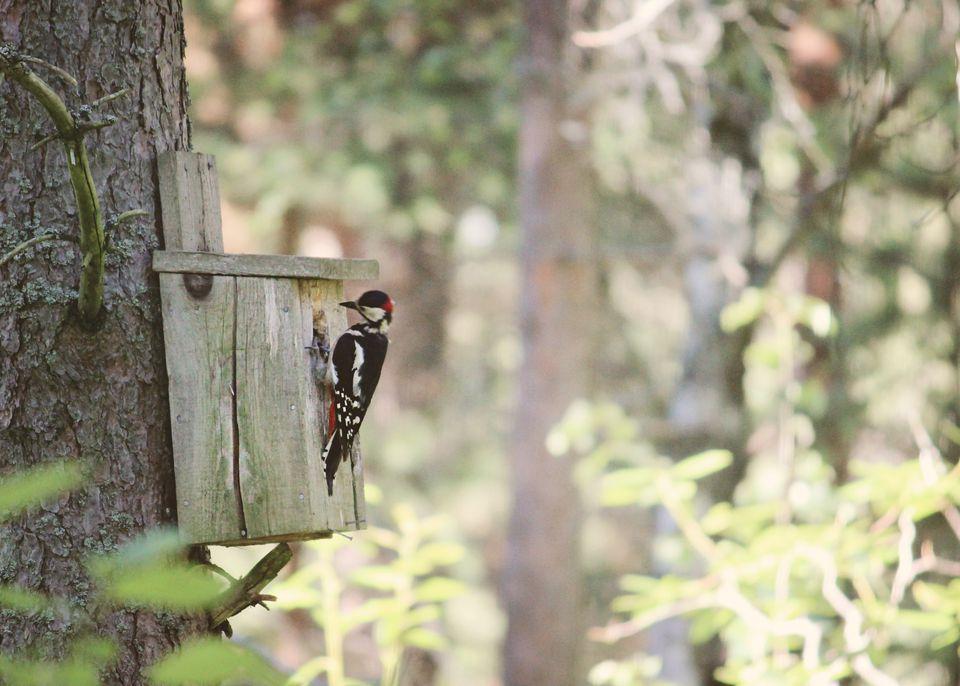 Woodpecker birdhouse