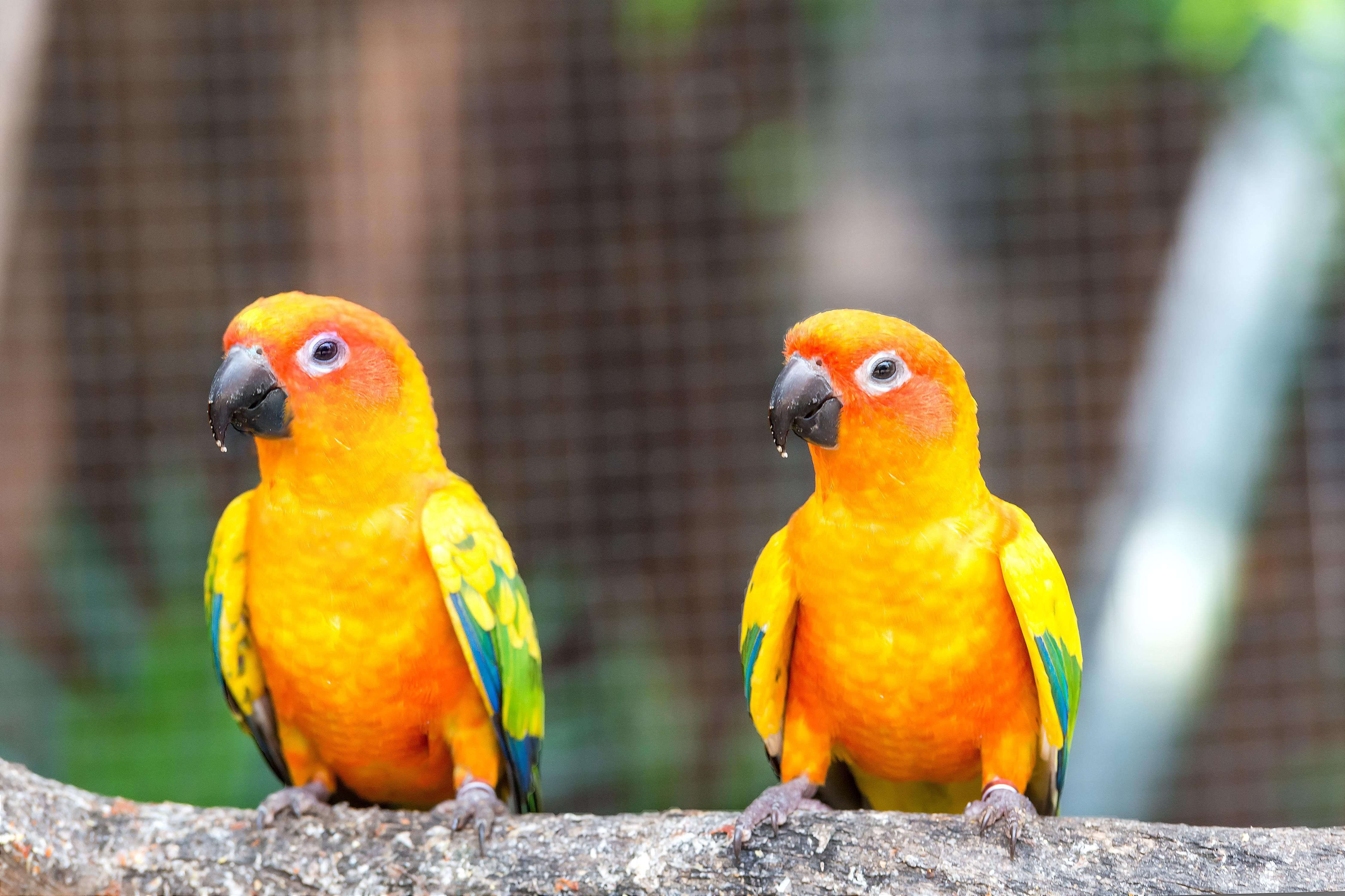 Updated Kitchen Ideas Keeping Sun Conures As Pets
