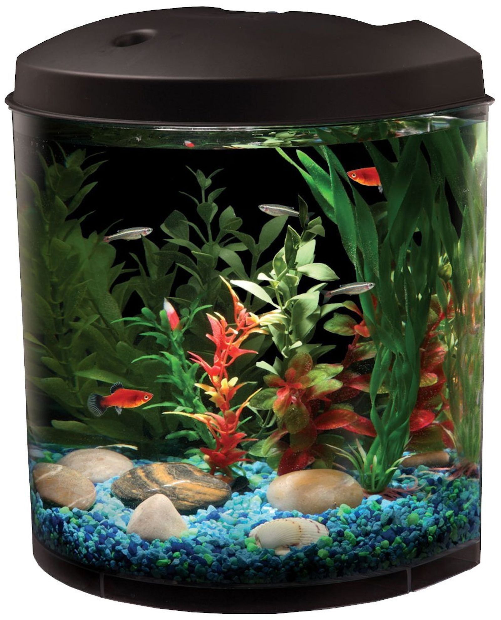 Freshwater aquarium fish information - Before You Buy An Aquarium Freshwater Aquariums Habitat