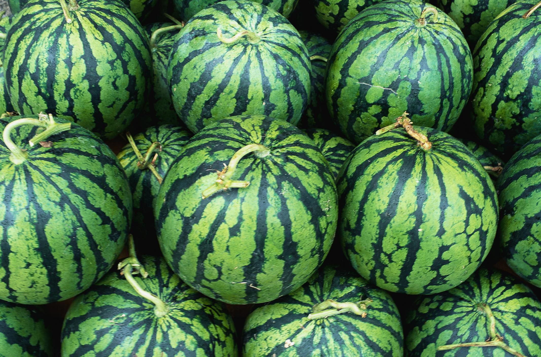 Determining the proper depth to plant seeds is your watermelon ripe and ready to harvest learn how to know here nvjuhfo Choice Image