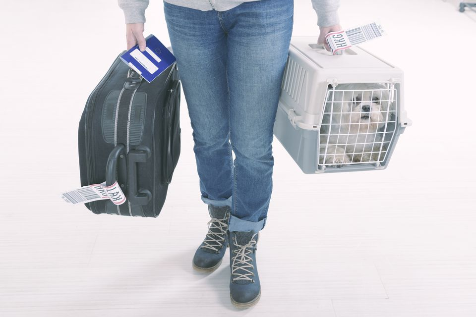 dog in airplane travel carrier