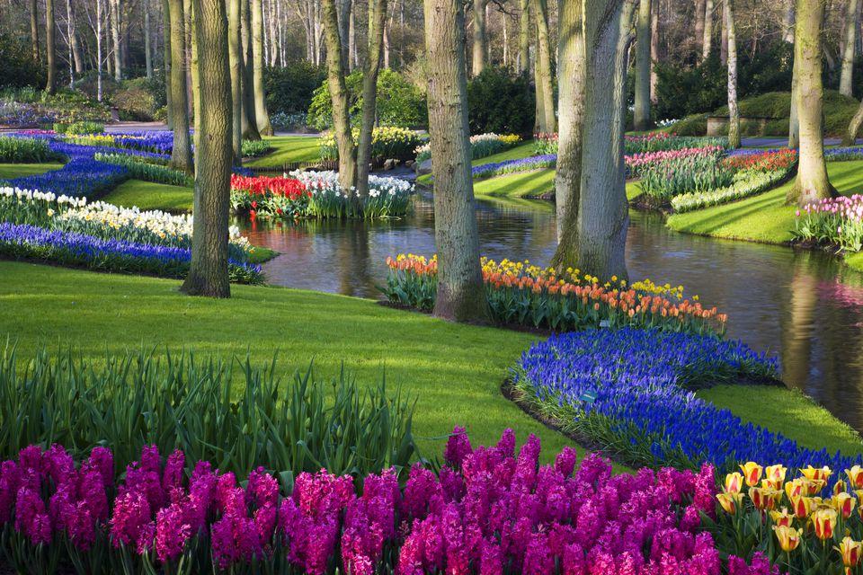 Pond and Spring Flowering Blubs Keukenhof Gardens