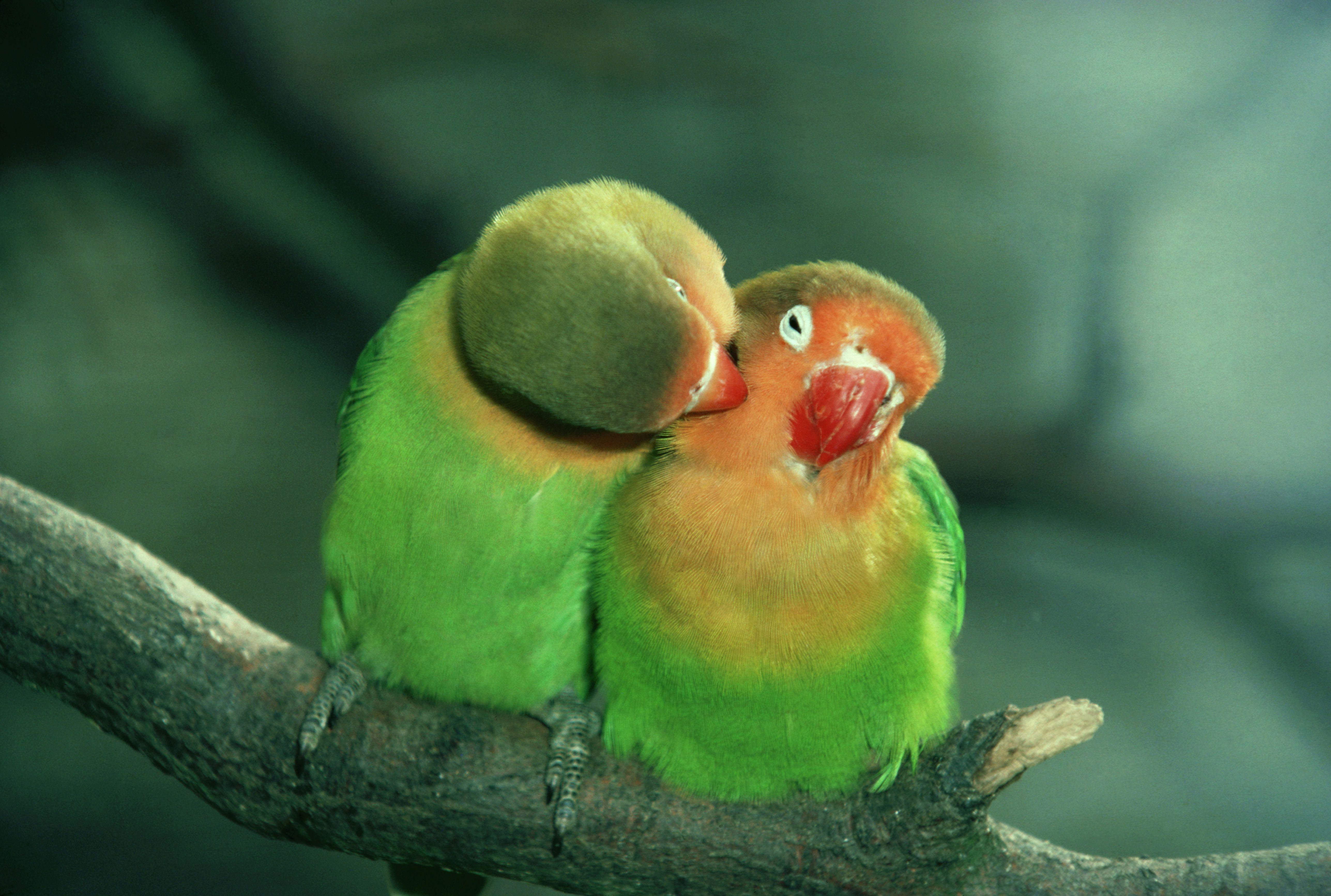 the top five companion bird species