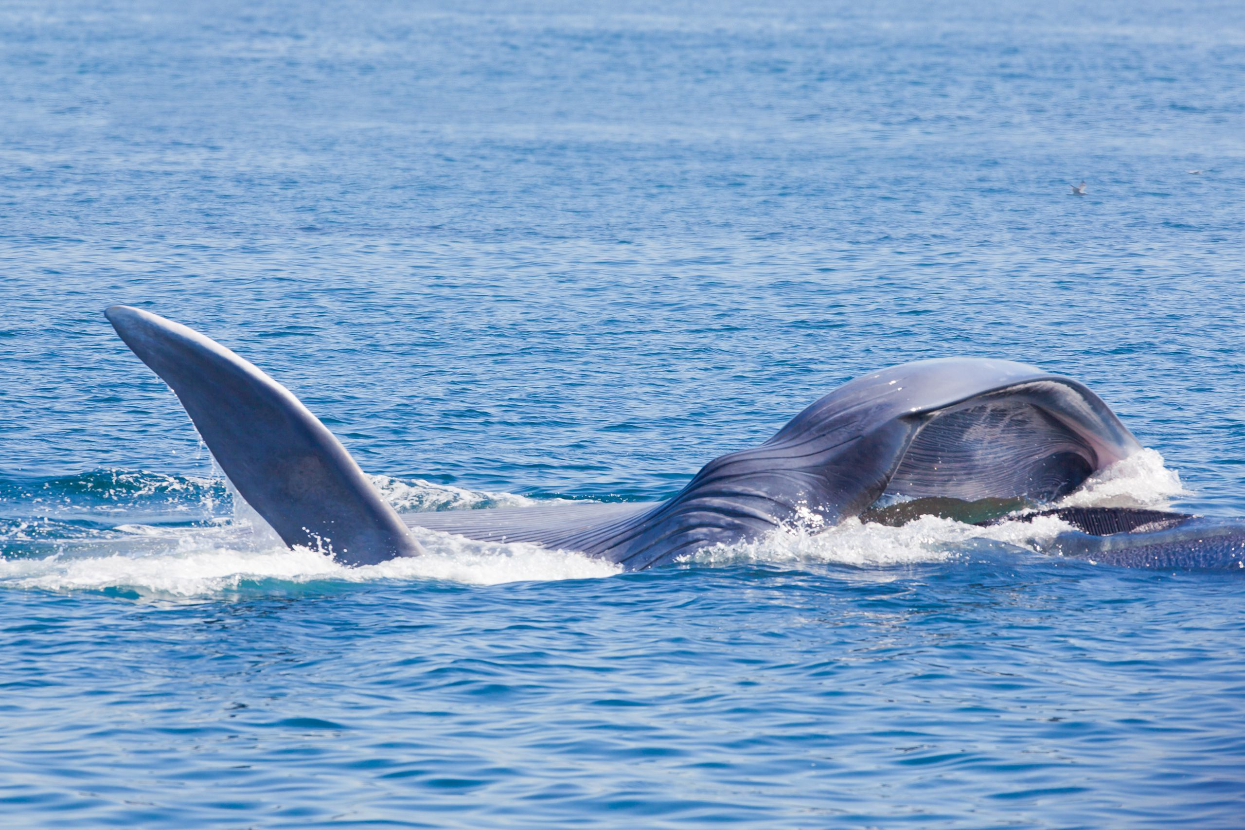 whale watching in los angeles and vicinity tips and best trips