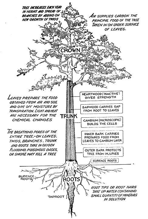 use tree parts to identify a tree