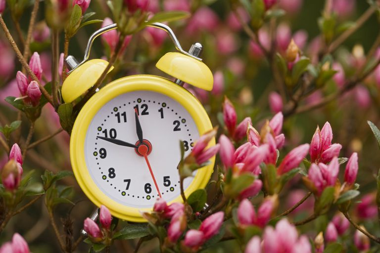 Old-fashioned alarm clock in a field of flowers.