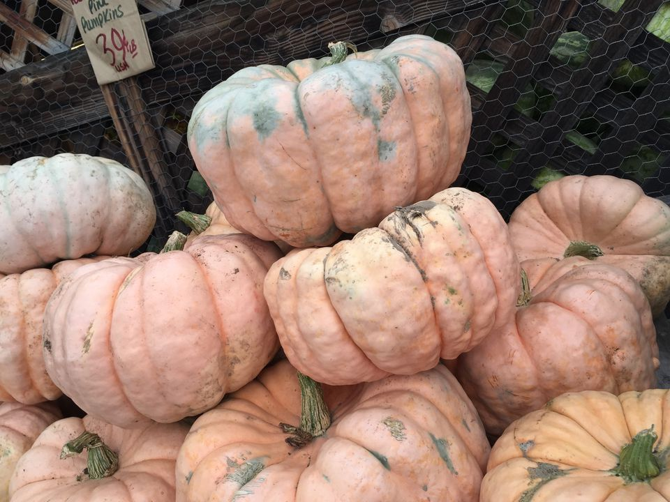 The Ultimate Guide To Pumpkin Types And Varieties-3712