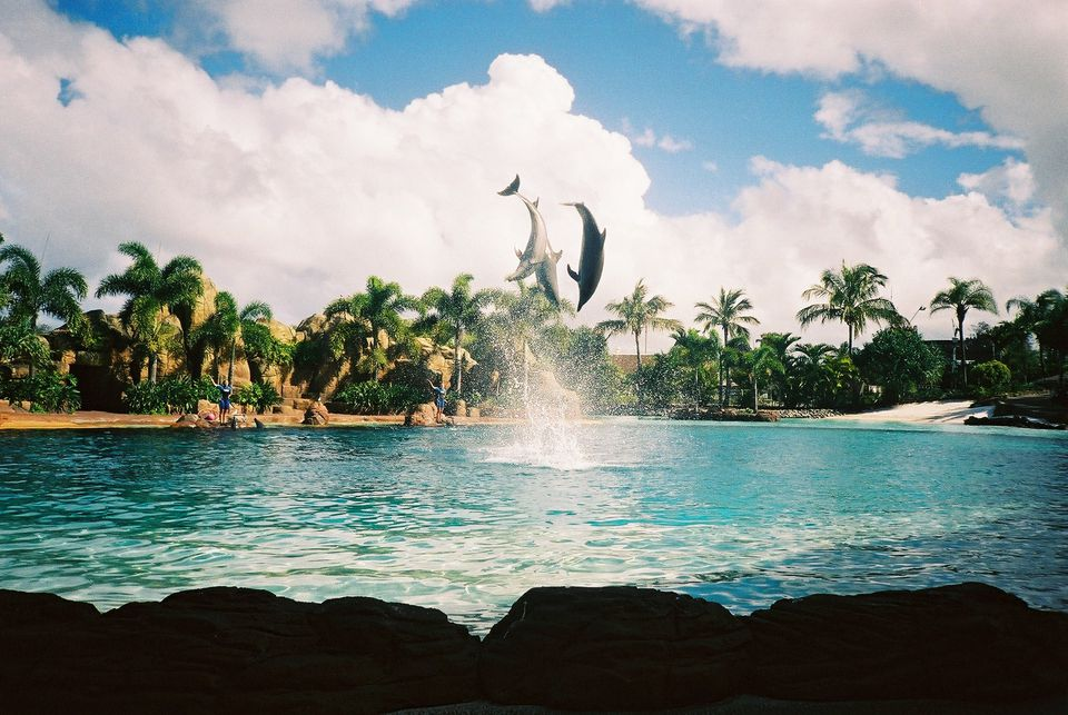 Dolphins jumping above the water