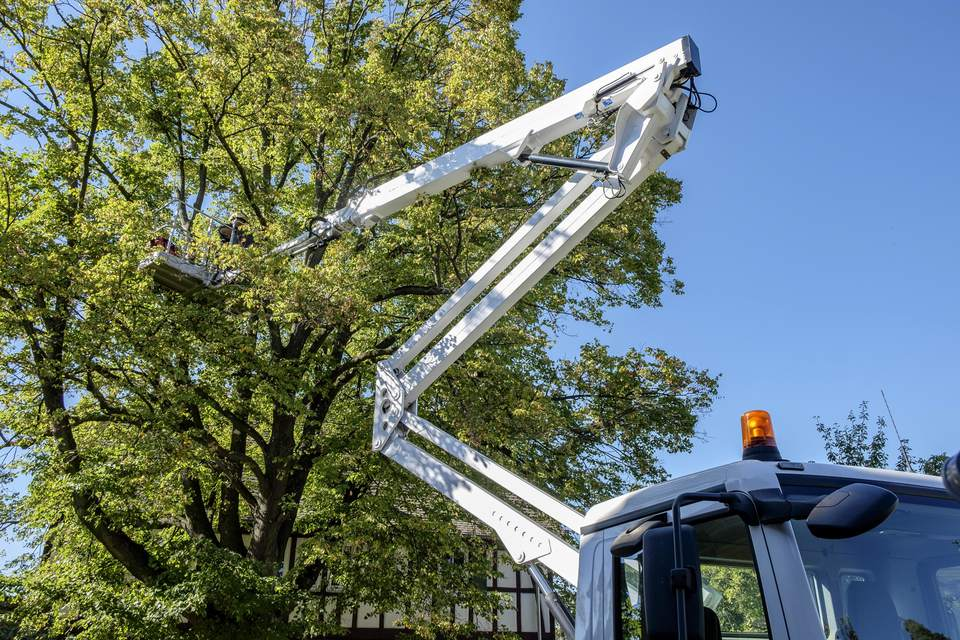 Arborist in lift working in a tree's canopy.