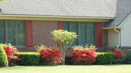 Photo showing foundation bed with mix of flowering and evergreen shrubs, tree.