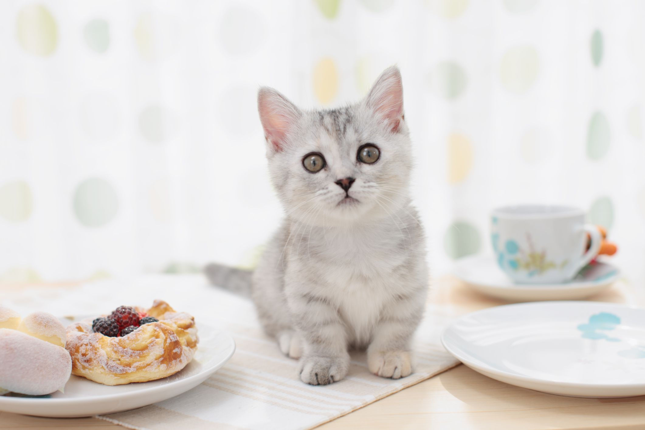 Benefits Of Cat Cafes