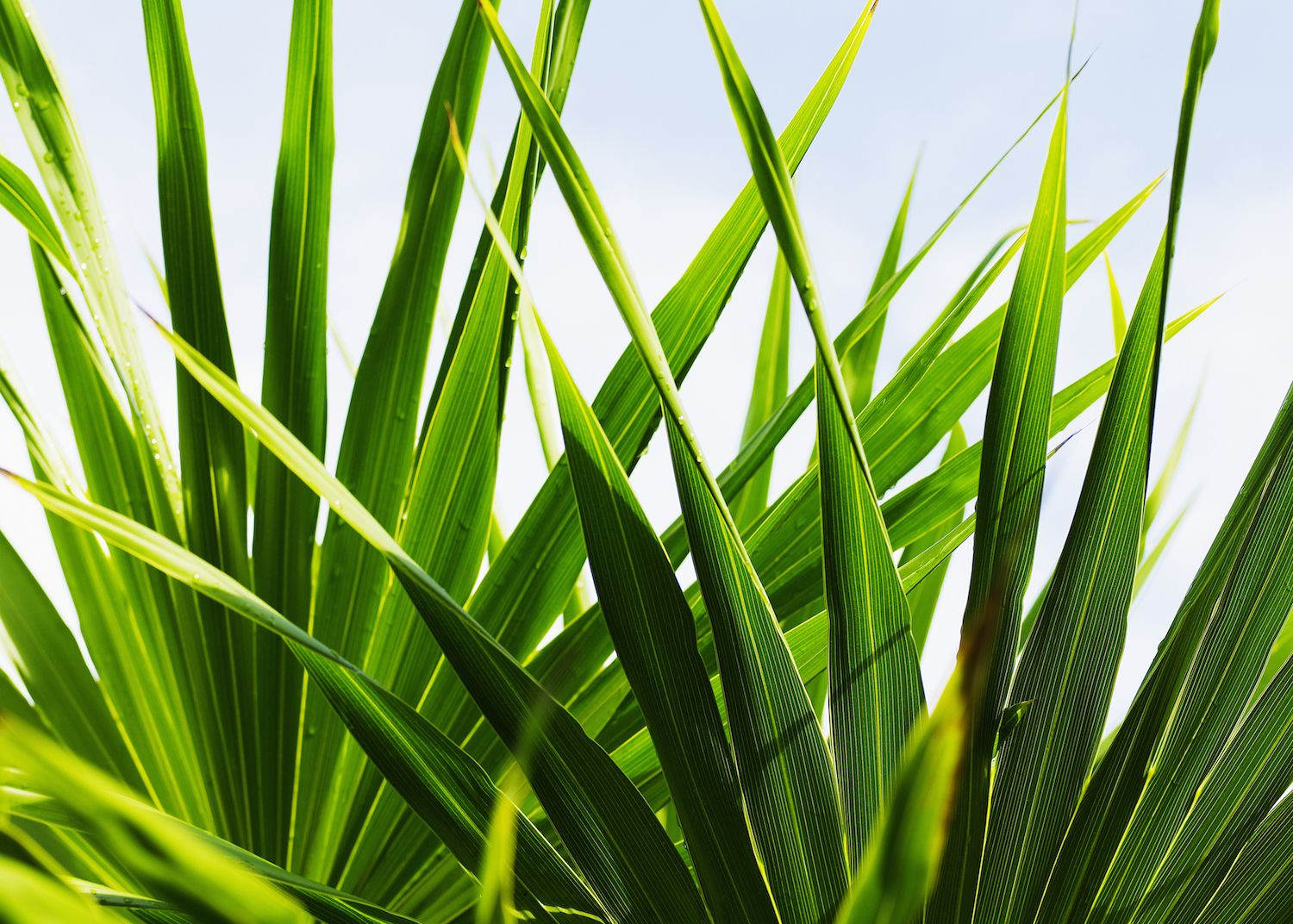The Top 10 Air-Purifying Plants for Your Home