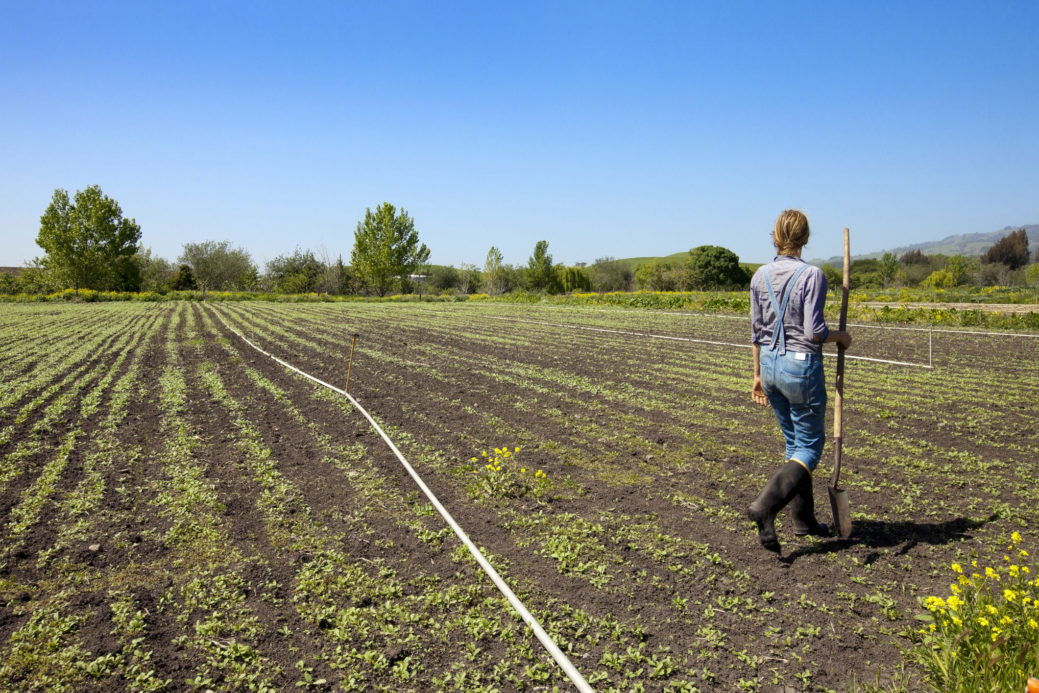 Specialty Farming And Alternative Crops For Small Farms