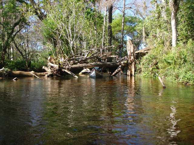 Canoeing under a Cypress Tree
