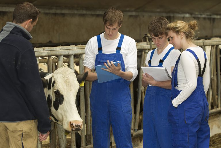 Students stand with a dairy farmer and a cow taking notes