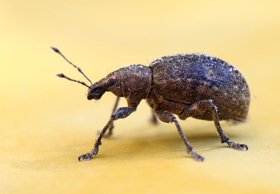 10 Steps To Keep Weevils And Bugs Out Of Food